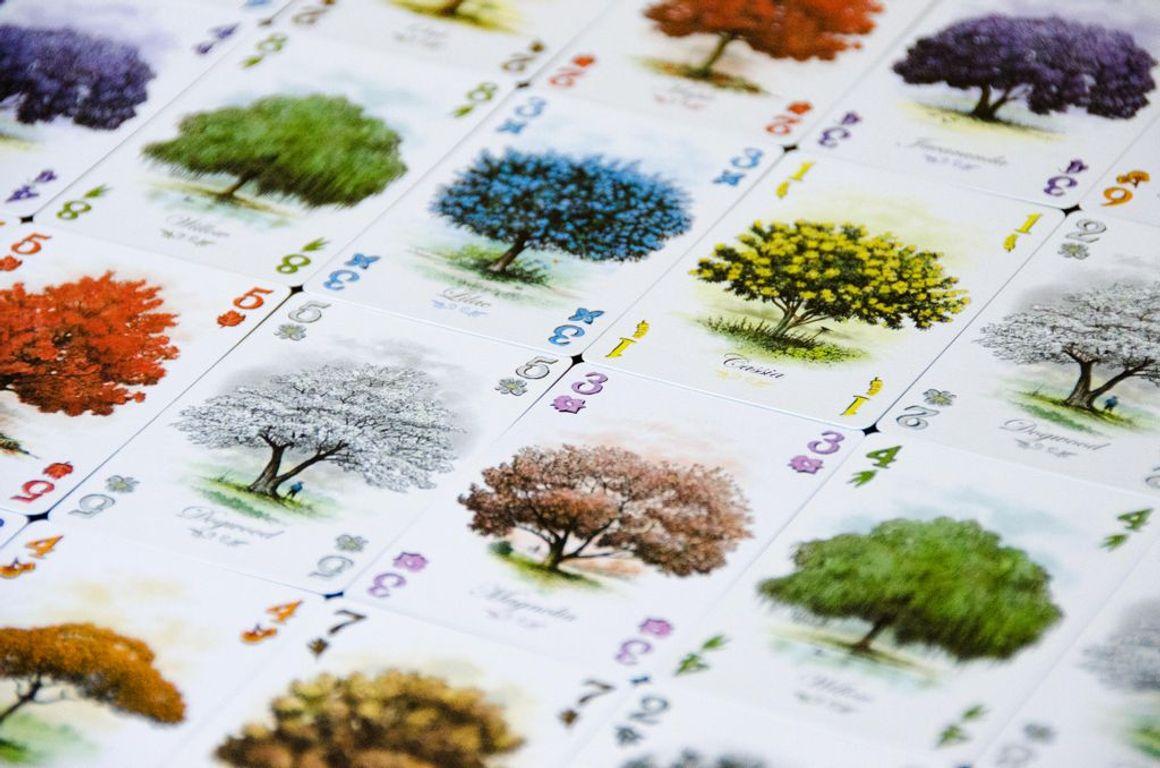 Arboretum cards