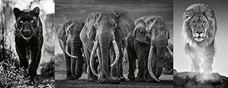 Panther Elephant Lion