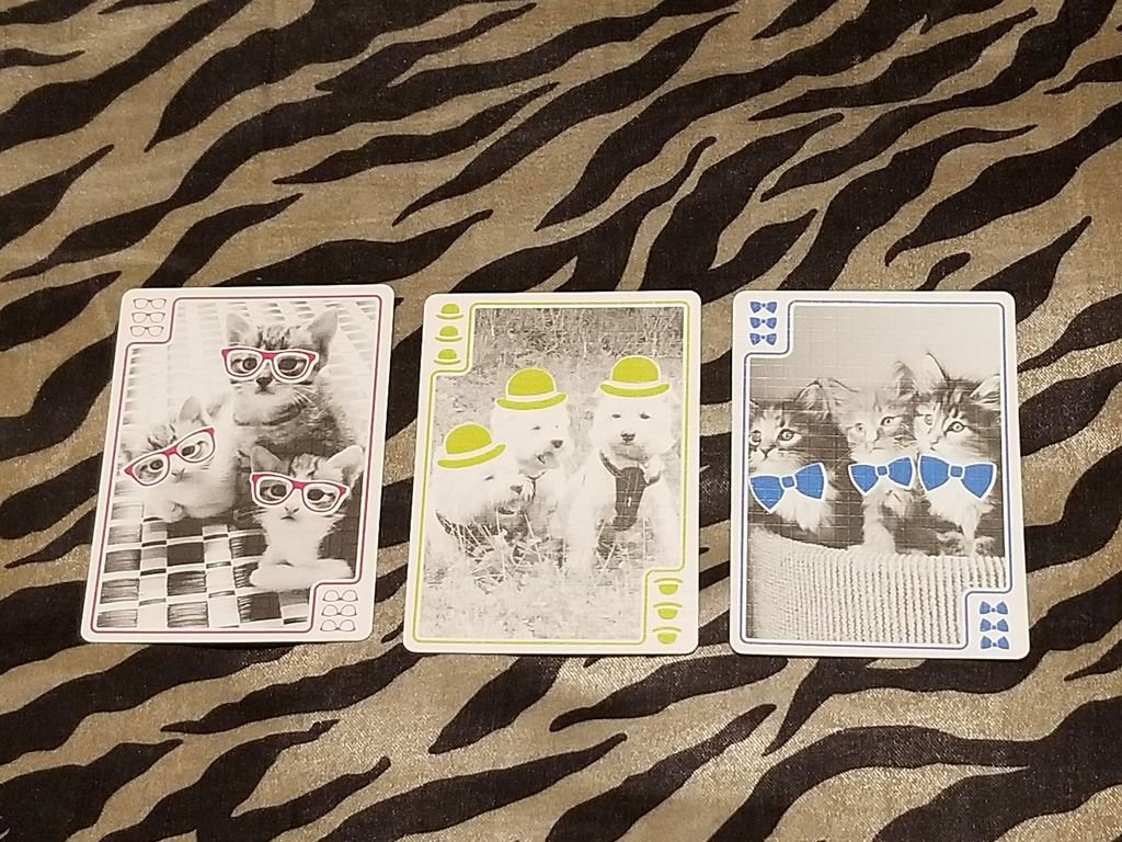 You Gotta Be Kitten Me! cartes