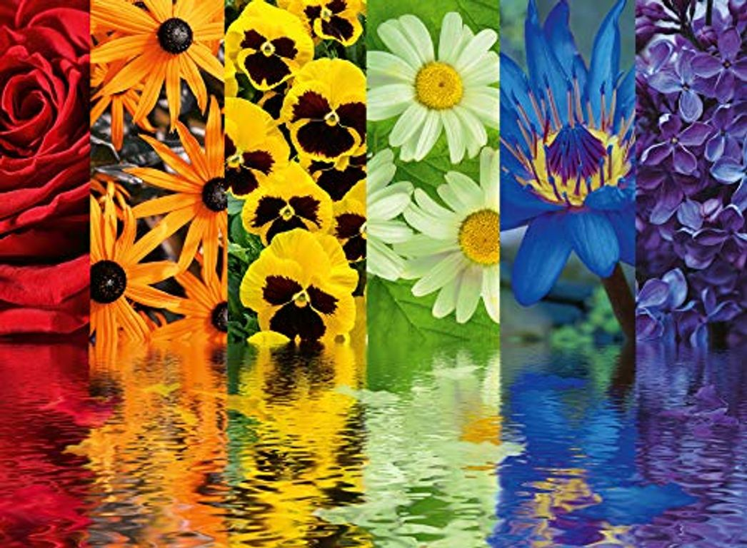 Floral Reflections