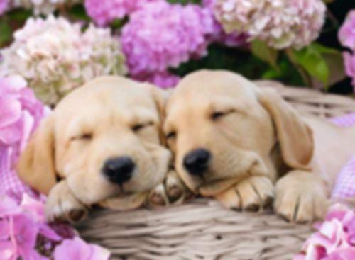 Cute Dogs in a Basket