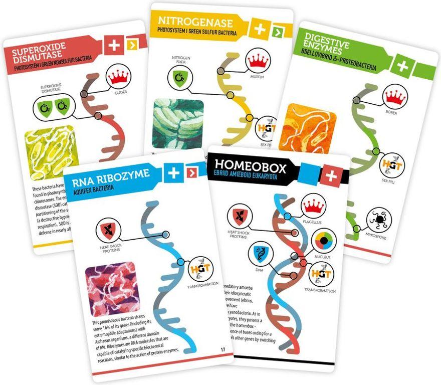 Bios: Genesis cards