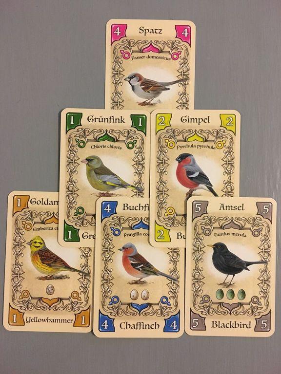 Piepmatz cards