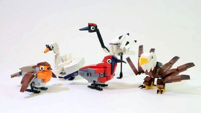 Birds components