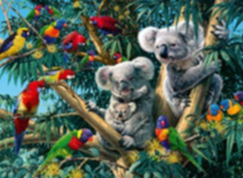 Koalas in the Tree