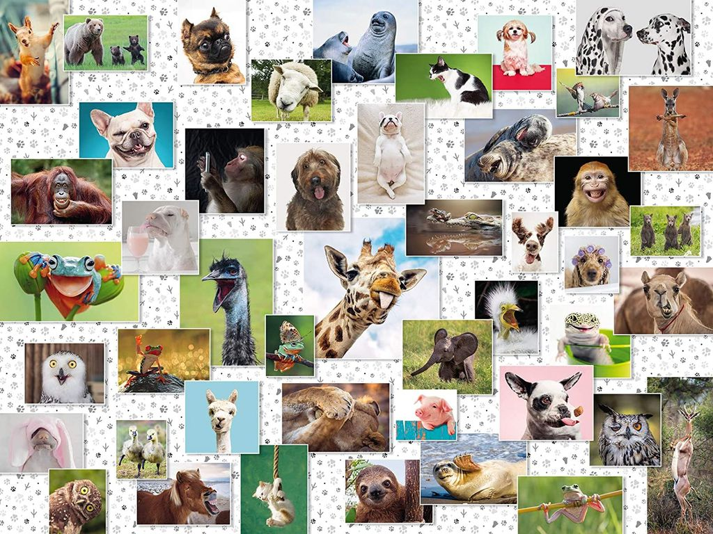 Funny Animals Collage