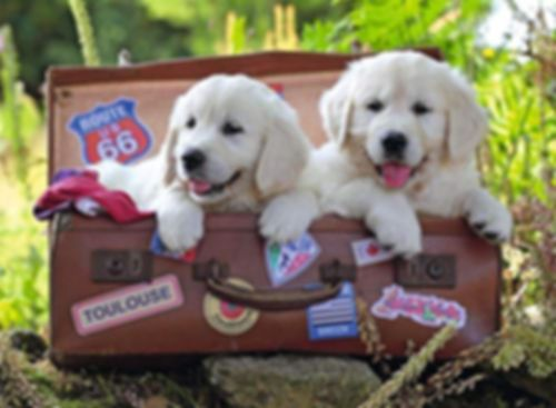 Travelling Pups