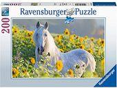 Sunflower Stallion