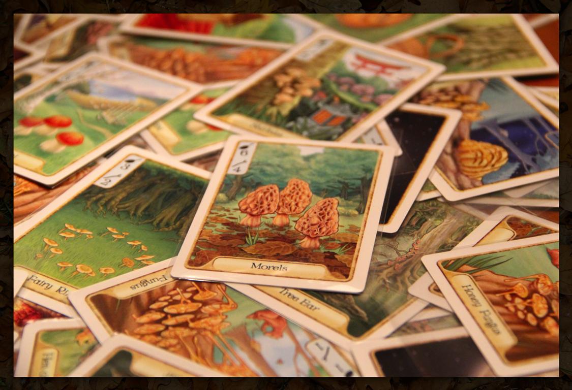 Morels cards