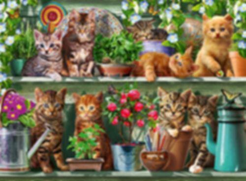 Cats on Shelf