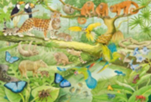 Animals in the Rainforest