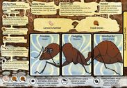 March of the Ants components