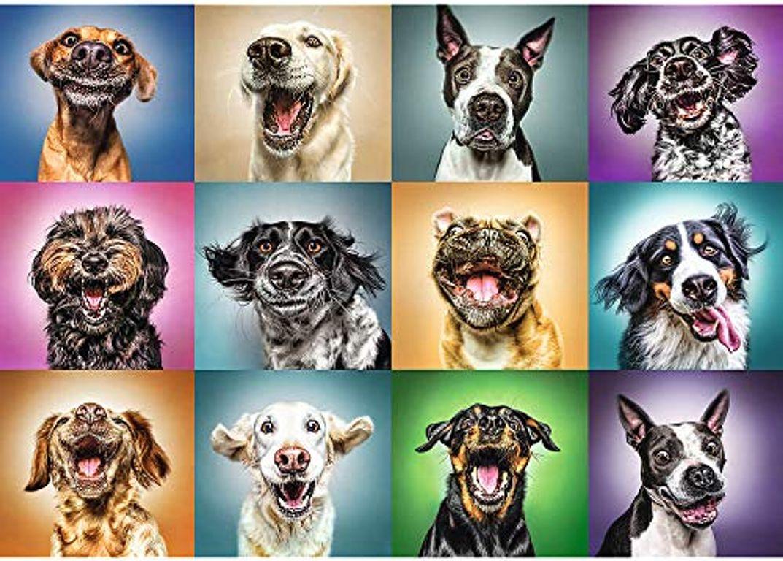 Funny Dog Portraits
