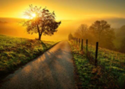 Landscape in the Morning Sun
